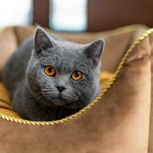 Cat Bed - Luxury Crown Cat Bed. Available in 3 Dog Bed sizes. Crown pet bedding also suits Dog, Puppy & Kittens