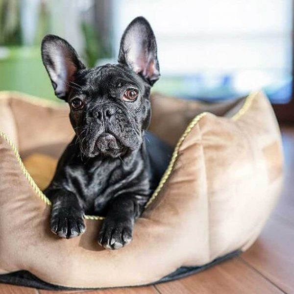 Dog Bed - Luxury Crown Dog Bed. Available in 3 Dog Bed sizes. Crown pet bed also suits Puppy, Cats & Kittens.